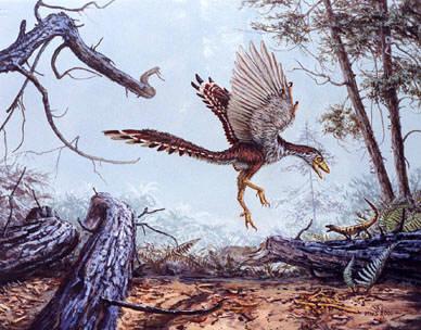 archaeopteryx Arheopterikss